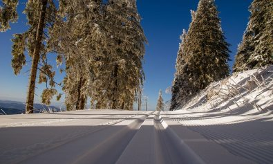 cross-country-ski-trail-1839039_960_720