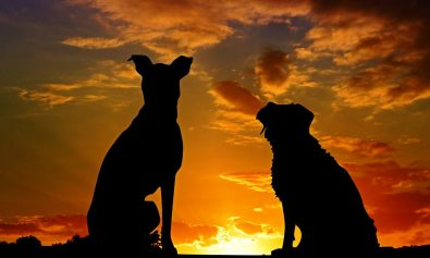 dogs-2222801_960_720